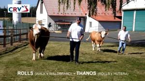 Přehlídka býků ISB Zásmuky