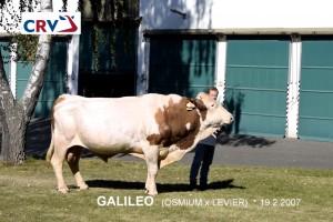 Přehlídka býků ISB Zásmuky - Fotografie 3
