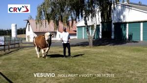 Přehlídka býků ISB Zásmuky - Fotografie 7