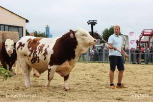 Přehlídka býků ISB Bohdalec - Fotografie 2
