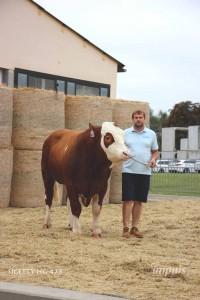 Přehlídka býků ISB Bohdalec - Fotografie 3