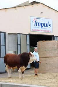 Přehlídka býků ISB Bohdalec - Fotografie 4