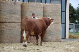 Přehlídka býků ISB Bohdalec - Fotografie 5