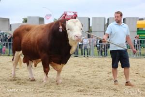 Přehlídka býků ISB Bohdalec