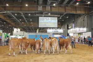 Národní výstava zvířat Brno 2021 - Fotografie 3
