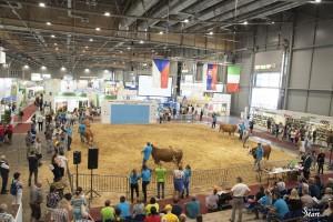 Národní výstava zvířat Brno 2021 - Fotografie 27