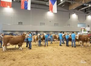 Národní výstava zvířat Brno 2021 - Fotografie 53